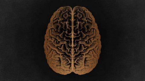 FTP042: Daniel Schmachtenberger – Neurohacking