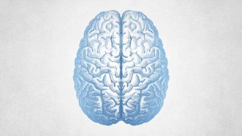 FTP043: Daniel Schmachtenberger – Neurohacking & Neurogenesis