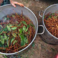 ayahuasca-brew-legal