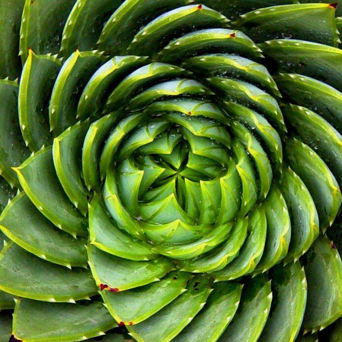 nature fractal 2